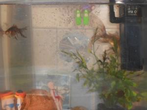 la plongée aquarium-300x225