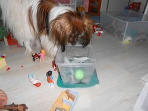 mon chien dao-eau1-300x225